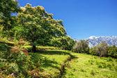Tree on the hillside — Stock Photo