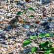 Sparrow bird  the beach — Stock Photo