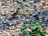 雀ビーチ — ストック写真