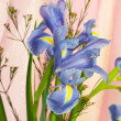 Beautiful fresh iris flowers. — Stock Photo