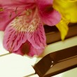 Flower on piano — Stock Photo