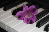 Flower on piano — Stockfoto