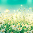 White camomile — Stock Photo #11853994