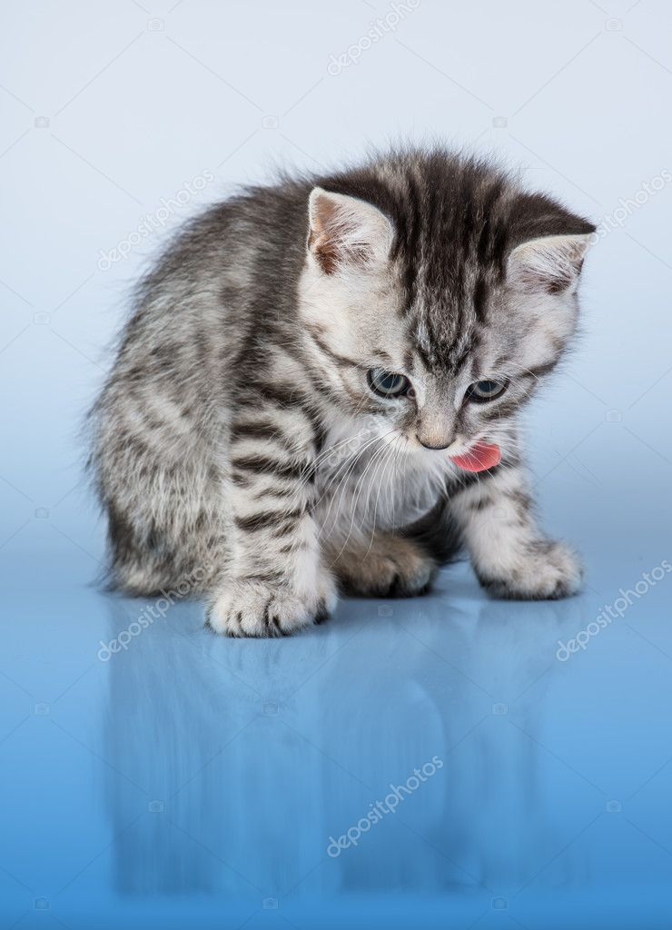 Britain's little kitten — Stock Photo #12025483