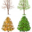 Tree, four seasons — Stock Vector