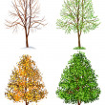 boom, vier seizoenen — Stockvector