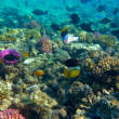Stock Photo: Tropical Fish and Coral Reef in Sunlight