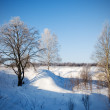 Winter landscape of frosty trees — Stock Photo