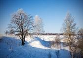 Winter landscape of frosty trees — Stock Photo