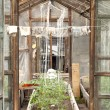 Self-made Glass greenhouse in countryside - Stock Photo