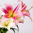 White and pink lily flowers — Stock Photo #11797993