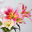 White and pink lily flowers — Stock Photo #11797994