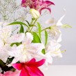 White and pink lily flowers — Stock Photo #11798015