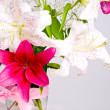 White and pink lily flowers — Stock Photo