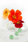 Nasturtium flowers in a small vase — Stock Photo