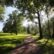 Sun footpath in the park — Stock Photo