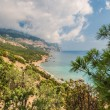 Coastline with pine trees — Stock Photo