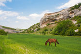 Green field, mountains and horses — Stock Photo