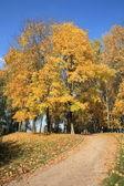 Maple alley at autumn — Stock Photo