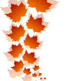 Autumn maple leaves isolated on white background — Stock Vector