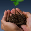 Young Seedling Plant. — Stock Photo