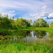 Bog under blue sky — Stock Photo #12379549