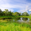 Bog under blue sky — Stock Photo