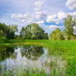Stock Photo: Bog under blue sky