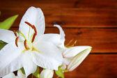 Lily květina na dřevěné pozadí — Stock fotografie