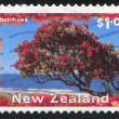 pohutukawa tree — Stock Photo