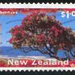 pohutukawa träd — Stockfoto #10758922