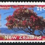 pohutukawa strom — Stock fotografie