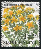 Hypericum perforatum — Stock Photo