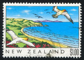 Gulls over coast — Stock Photo