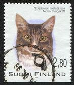 Stämpel tryckt av finland — Stockfoto
