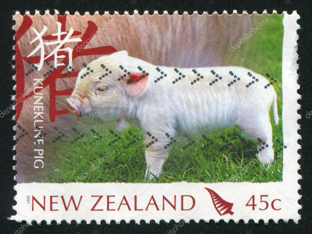 NEW ZEALAND - CIRCA 2007: stamp printed by New Zealand, shows Pig breeds, Kunekune, circa 2007 — Stock Photo #10923372