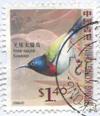 Sunbird furcata — Foto de Stock
