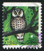 Shows owl — Stock Photo