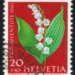 Flower lily of the valley — Stock Photo