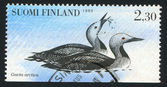 Pair of Arctic Loon — Stock Photo