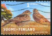 Eurasian Skylark — Stock Photo