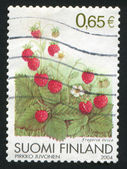 Wild Strawberries — Stok fotoğraf