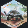 Turtle - Foto de Stock  
