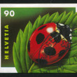 Ladybug - 