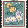 Crocus - Stockfoto