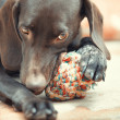 Dog and ball — Stock Photo