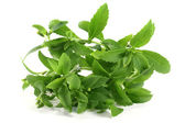 Stevia — Fotografia Stock