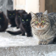 Stock Photo: Group of cats