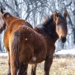 Red horses on the field — Stock Photo