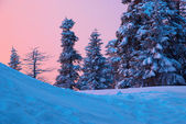 Sunset in the winter forest. — Stock Photo